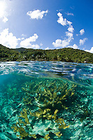 Split level image of elkhorn coral at Hawksnest Bay.St. John, US Virgin Islands