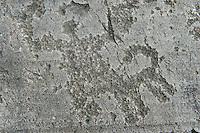 Petroglyph, rock carving, of a ceremony. Carved by the ancient Camunni people in the iron age between 1000-1200 BC. Rock no 24, Foppi di Nadro, Riserva Naturale Incisioni Rupestri di Ceto, Cimbergo e Paspardo, Capo di Ponti, Valcamonica (Val Camonica), Lombardy plain, Italy