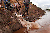 These tribes can always count on the Omo as a water supply for their needs as well as their animals.  The mud on the bank is slippery though and every now and then an animal slips and floats downstream and can't get back onto the bank.  These men were bathing when this crazed woman showed up and demanded they help her recover her cow.