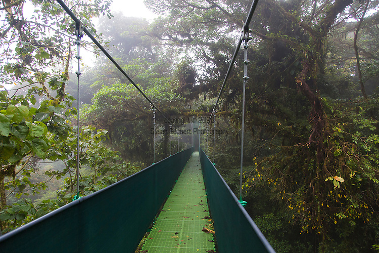 The Monteverde Cloud Forest Reserve (Reserva Biológica Bosque Nuboso Monteverde) is a Costa Rican reserve located along the Cordillera de Tilarán mountain range within the Puntarenas and Alajuela provinces. Named after the nearby town of Monteverde and founded in 1972, the Reserve consists of over 26,000 acres of tropical rainforest. The Reserve consists of 6 ecological zones, 90% of which are virgin forest. An extremely high biodiversity, consisting of over 2,500 plant species (including the most orchid species in a single place), 100 species of mammals, 400 bird species, 120 reptilian and amphibian species, and thousands of insects, has drawn scientists and tourists since. The Skywalk in Monteverde