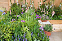 Patio landscaping mixture of food plants and perennial flowers, Fennel, digitalis, boxwood Buxus, pots of thymus thyme, verbena, herbs iris, garden bench, pot containers