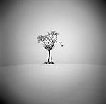 Lone tree in desert like environment