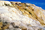 Morning light on terraces at Canary Spring, Mammoth Hot Springs, Yellowstone National Park, Wyoming USA