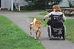 Woman In Wheelchair With Dogs