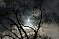 The sun shows coolly through the persistent clouds and the heart-shaped branches of a winter tree