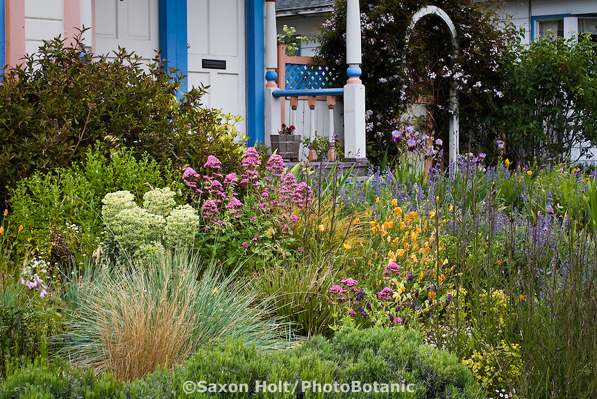Amy Stewart's real, rambling, chaotic, dirty, bug-ridden, no lawn, drought tolerant, flowering perennial front yard cottage garden.