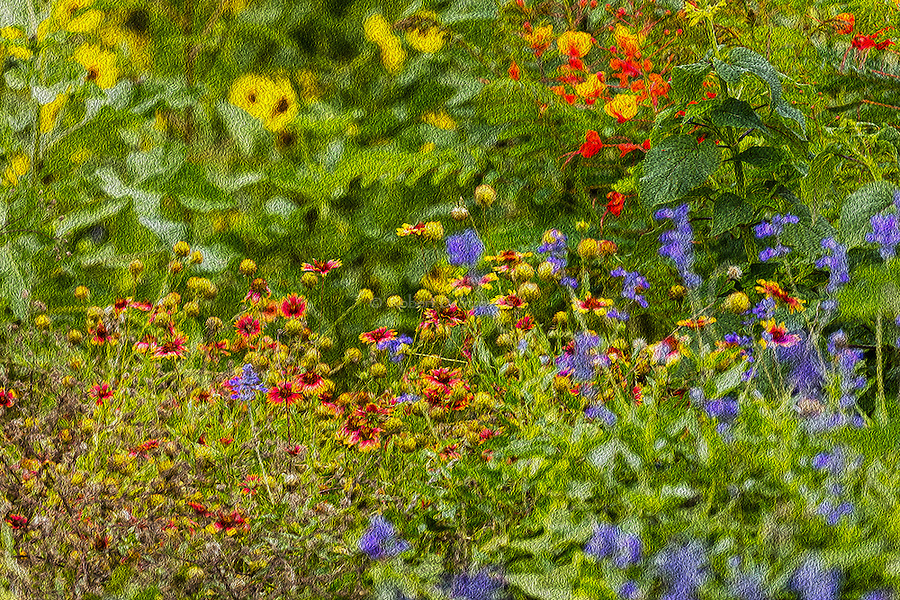 Selection of landscape and botanical images with a painterly filter applied.