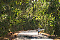 Florida, Fernandina Beach, Fort Clinch State Park, Road through spanish moss covered Oak trees