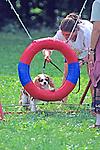 Dog Going Through Ring