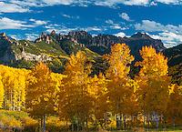 Aspens, Populus Tremula, Cimmaron Ridge, Precipice Peak, Uncompahgre National Forest, Colorado