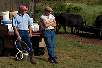 John Stuedemann (left) and his helper work with his cattle in Comer, Ga. on Monday, Sept. 25, 2006. Stuedemann says he applies techniques with his cattle that he has learned since childhood in Iowa, such as positive reinforcement, minimal occurrences of pain or fear, and calm motions and speech.