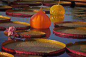Photo by Leandra Melgreen Lewis of the Lily pads floating with Chuily glass orbs at<br />