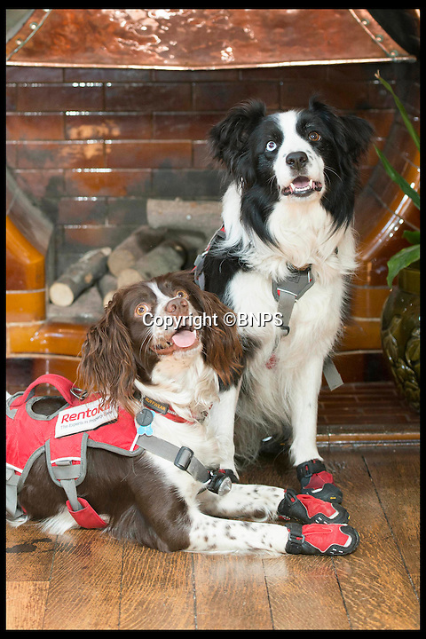 BNPS.co.uk (01202 558833)<br /> Pic: LauraDale/BNPS<br /> <br /> Dry-rot detecting dogs Jess (L) and Meg (R).  At Bantock House Museum.<br /> <br /> New tricks for old dog breeds...<br /> <br /> Enterprising Mark Doggett has come up with a new business idea that's not to be sniffed at...A team of crack pooches that use thier noses to find dry rot in old houses.<br /> <br /> And he now has plans to train the cunning canines to hunt out bed bugs for hotel chains as well.<br /> <br /> Sniffer dogs have been trained to detect the destructive fungi early and in areas humans can't access, meaning they could save people thousands of pounds of expensive damage.<br /> <br /> There are even plans to train the dogs to detect bed bugs, which could prove a huge help to hotels, hospitals and boarding schools.<br /> <br /> Mark Doggett, 30, started his business Enviro-dogs last year and it is the only company in the country people can hire to check properties for dry rot.