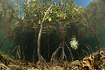 Shallow coral reef and mangroves. North Raja Ampat, West Papua, Indonesia