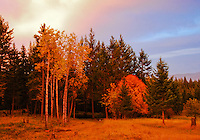 Early morning sun lights up the autumn colors in the Kootenai Forest