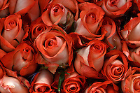 Dia de San Valentin / St. Valentine's Day 2014