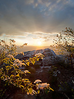 The setting sun lights the early spring blooms in the mountains of Pennsylvania. McConnellsburg, PA