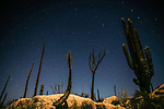 In the Cataviña Desert on Mexico's Baja Peninsula, stars punctuate the evening sky above a landscape dominated by cordon cacti and boojum trees. This beautiful yet seldom visited desert is one of my favorite areas, affording the blessings of striking imagery and solitude.