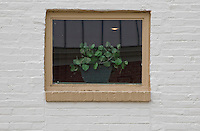 Green plant in window.