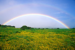 Double rainbow over wildflowers and ranch land, Kohala Mountains, The Big Island, Hawaii USA