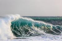 A turquoise wave runs along a left-hand shore break at Lumaha'i Beach, Kaua'i.