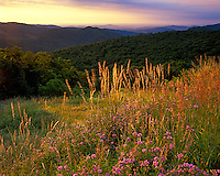 Shenandoah National Park, VA<br /> Morning light on grasses with the distant Shenandoah Mountains from Thornton Overlook