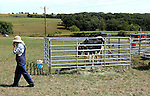 . Morgan Horse Field Day August 28, 2005 in Darlington, Wisconsin.