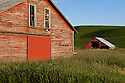WA09635-00...WASHINGTON - Palouse farm field and barns in Whitman County.