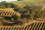 Foley vineyards, Santa Rita Hills, California
