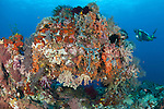 Underwater archway covered in soft corals (Dendronephthya sp.) with diver, Raja Ampat, West Papua, Indonesia