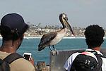 OCEANSIDE, CA. PIER ESSAY