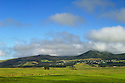 Ranch pasture, cattle, Waimea town and the Kohala Mountains from Mana Road, Island of Hawaii..