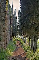 Cypress Pathway