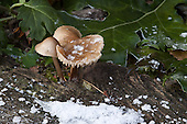 Paddenstoelen | Mushrooms