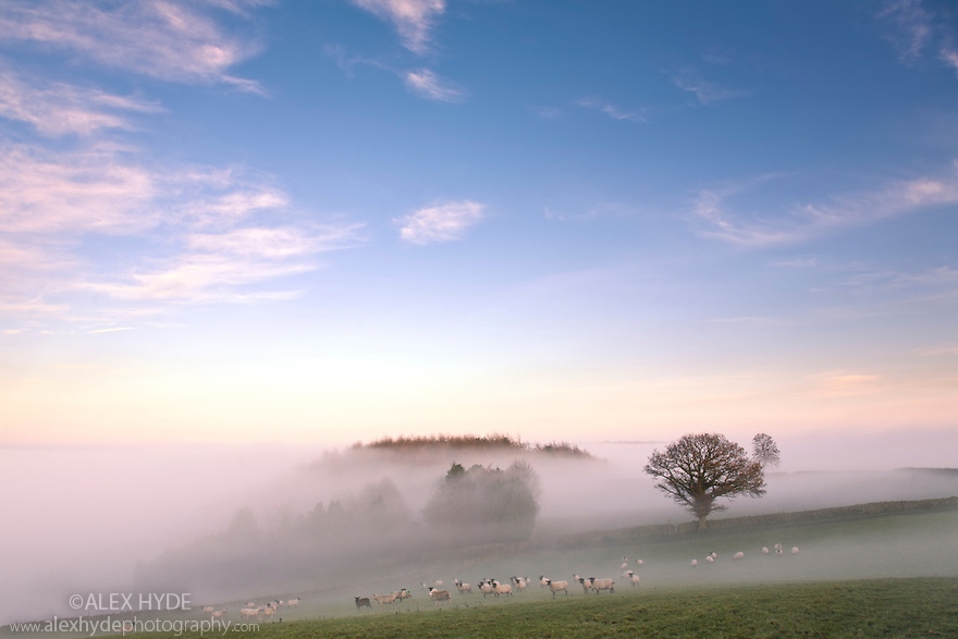 A temperature inversion causing hanging mist, nr. Birchover, Peak District NP, November 2008.