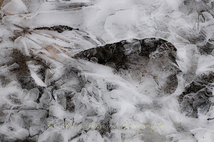 &quot;RIVER ICE-1&quot;<br /> <br /> Ice formations along a river's edge creating intricate and beautiful designs