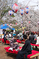 cherry blossom time in Kyoto, Japan