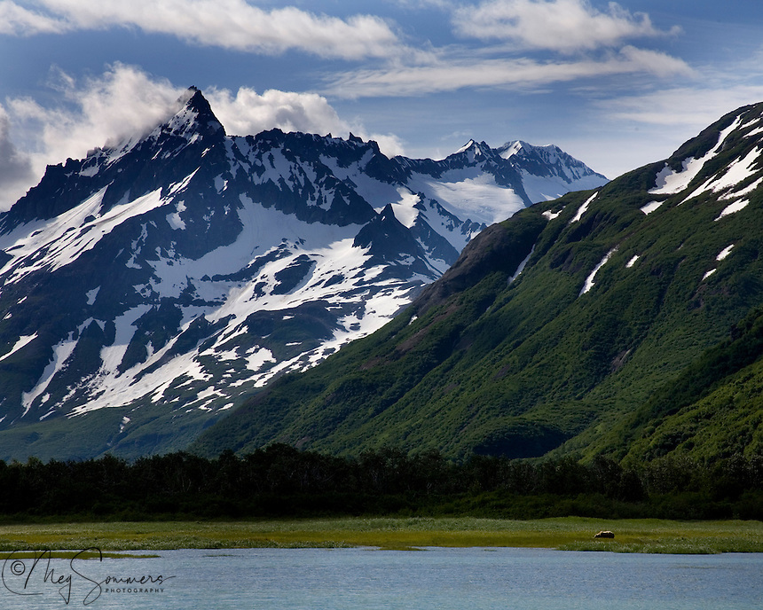 Kukat Bay in Katmai National Park is rugged and very wild. For perspective in size, look closely and find the brown bear (Ursus arctos middendorffi) grazing on sedges of the bay.