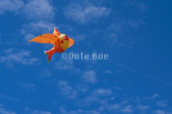 funny fish kite in the sky