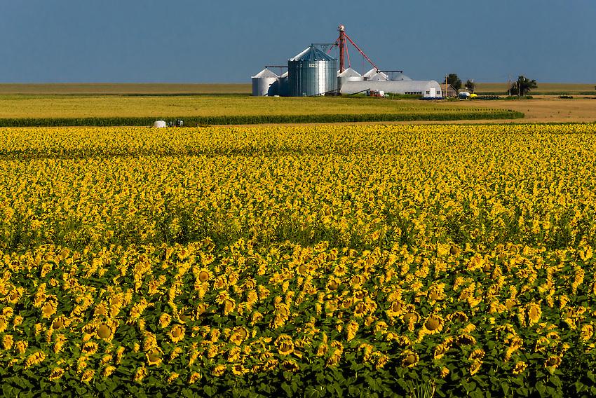 Goodland (KS) United States  city images : ... Sons Farm, near Goodland, Western Kansas USA. | Blaine Harrington III