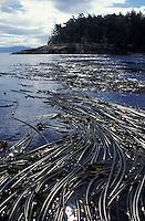 kelp forest photos