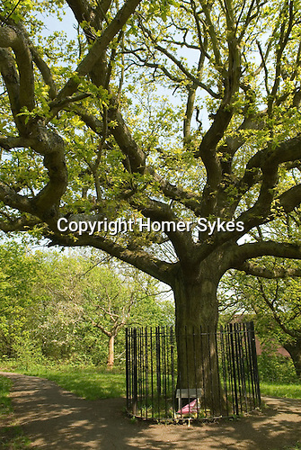 Honor Oak, One Tree Hill, Honor Oak, South London. UK. ..Honor Oak is an inner suburban area principally of the London Borough of Lewisham, with part in The London Borough of Southwark. The name originates from Oak of Honor Hill, or One Tree Hill. The legend is that on 1 May 1602, Elizabeth I picnicked with Sir Richard Bulkeley of Beaumaris in the Lewisham area by an oak tree at the summit of a hill. The tree came to be known as the Oak of Honor. The tree surrounded by railings is an oak, and was planted c1905 as a successor to the historic one