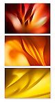 Close-up photographic triptych of lily flowers. Images 268, 269 and 270.