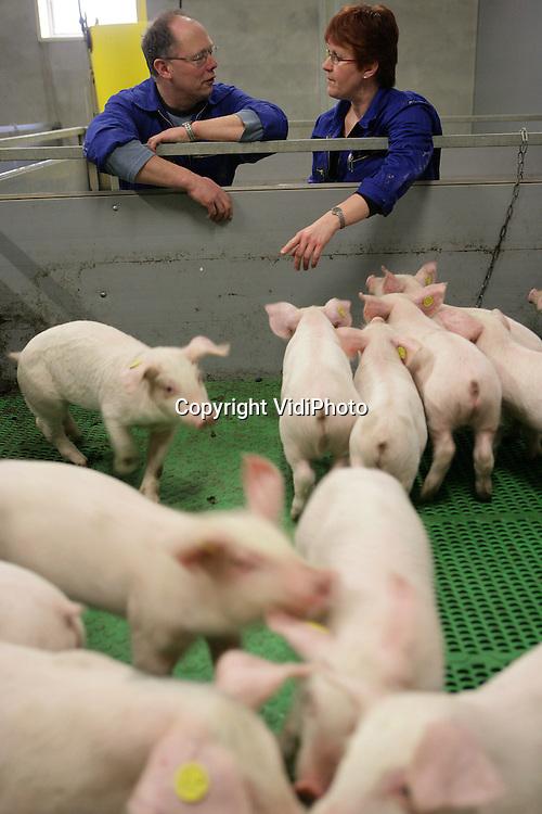 Foto: VidiPhoto..BENNEKOM - Gespeende biggen bij varkenshouder Van Steenbergen in Bennekom.