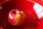 McIntosh Apple in shiny red bowl, Malus domestica