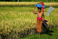 Old women walking in Ricefield, Ubud Area