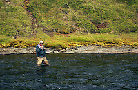 Atlantic Salmon Catch and Release Fly Fishing in Iceland. Fly fisherman fighting salmon in Nedsta Gil pool Svalbardsa Thistilfjordur.