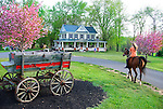 "Flanked by cherrry blossoms and an ancient spring wagon, Kelsey.Stewart rides her Arabian mare, Chrissy, through the peak of.springtime at ""Good Feelings Farm"" along Kate Wagner Road in Westminster.  Kelsey's parents, Kevin and Karen, purchased the.farm, some say is the prettiest farm in Carroll County,  nearly 15 .years ago from Kevin's parents.."