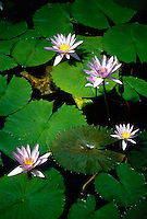 LILIACAE FAMILY<br />