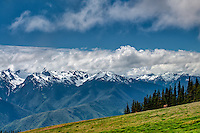 A view of the Olympic Mountains as seen from atop Hurricane Ridge. Not only are the peaks white and snow-capped all year long, there is a surprising amount of wildlife - particularly in the early morning hours.